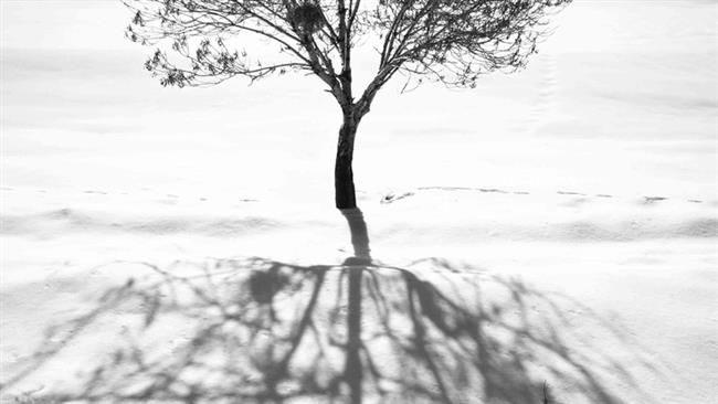by Abbas Kiarostamidi